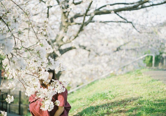 羽根大池の桜