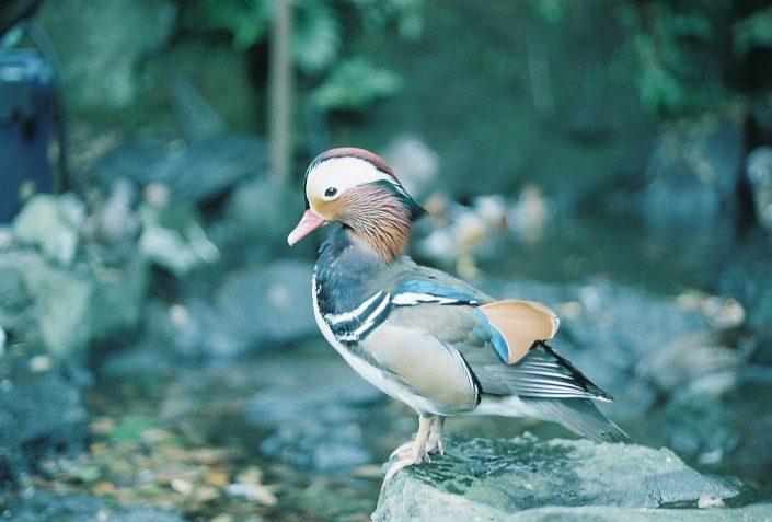 伊豆シャボテン動物公園の鳥