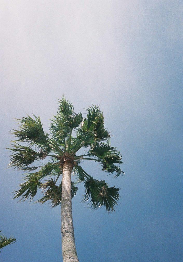 志摩スペイン村のヤシの木