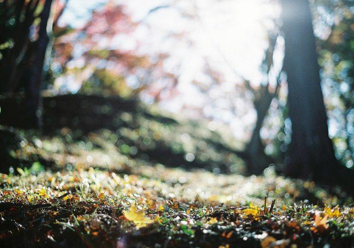 香嵐渓の紅葉03