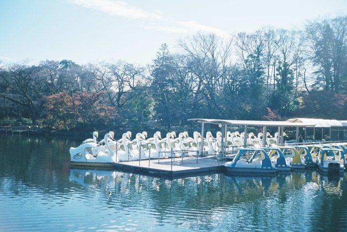 井の頭公園のアヒルボート