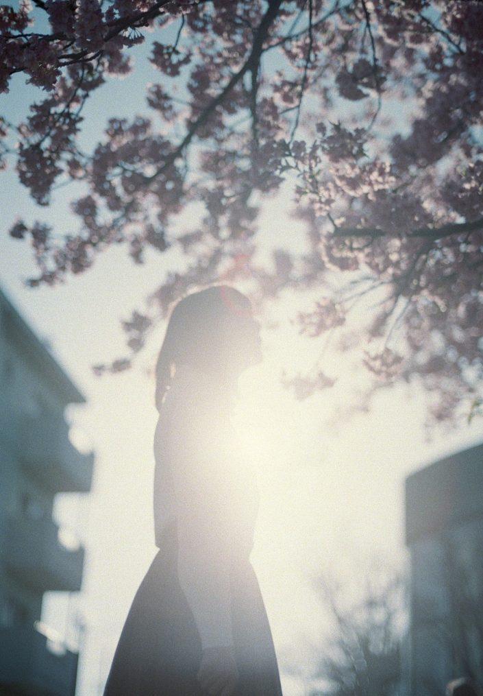 桜を見つめる逆光の女性