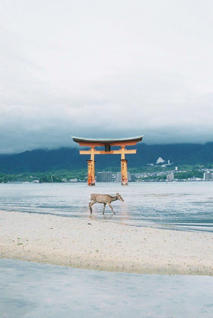 厳島神社08