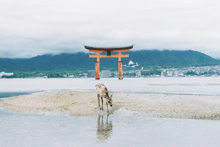 厳島神社09