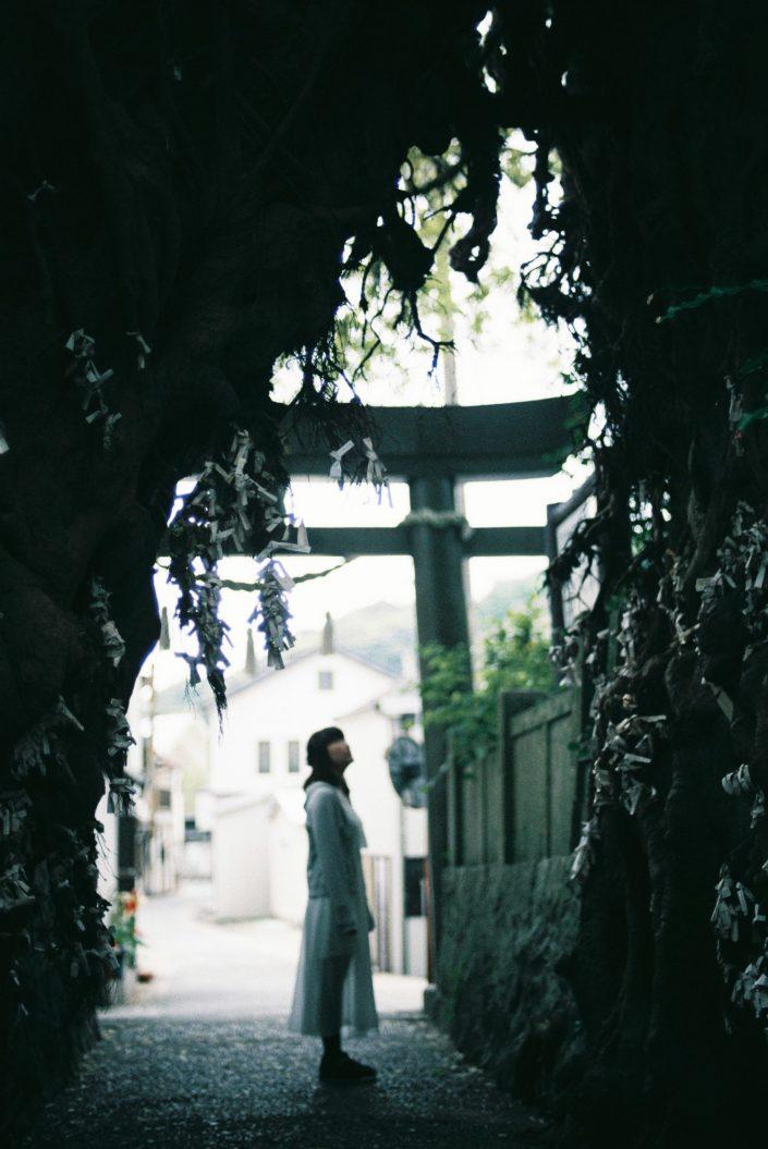 奈良尾神社のあこう樹01