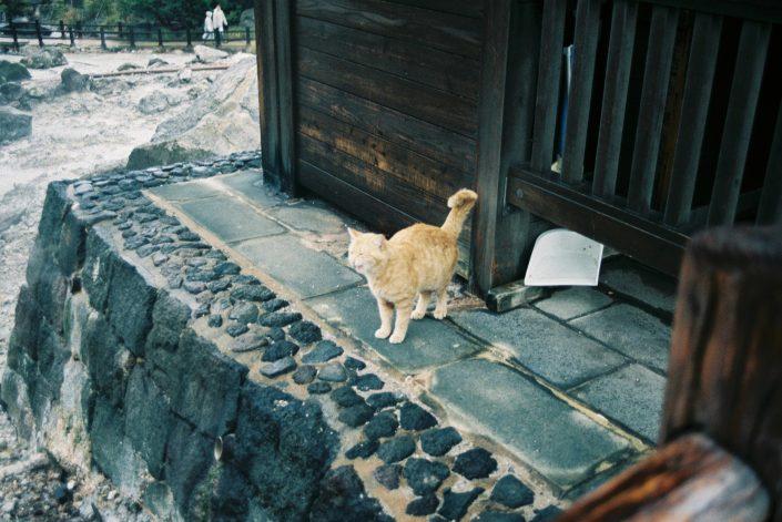 雲仙地獄の猫01