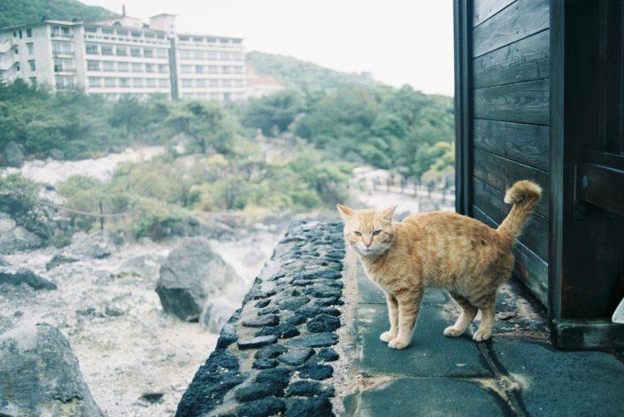 雲仙地獄の猫02