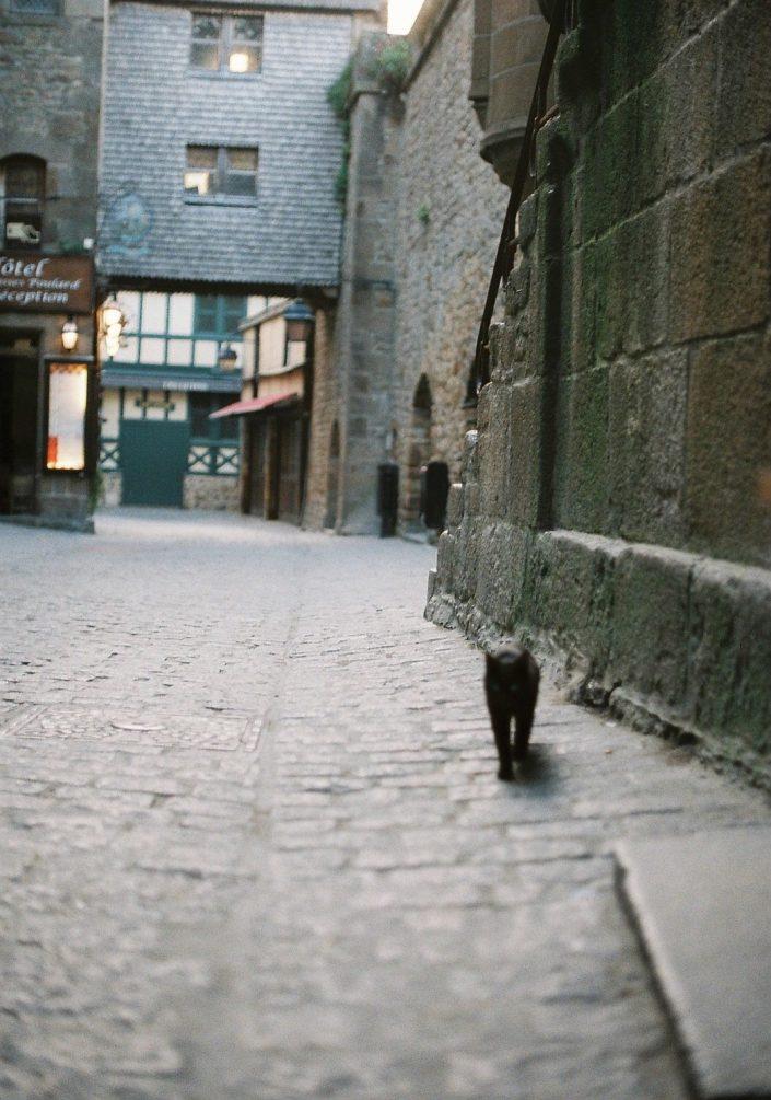 モン・サン=ミシェルの猫