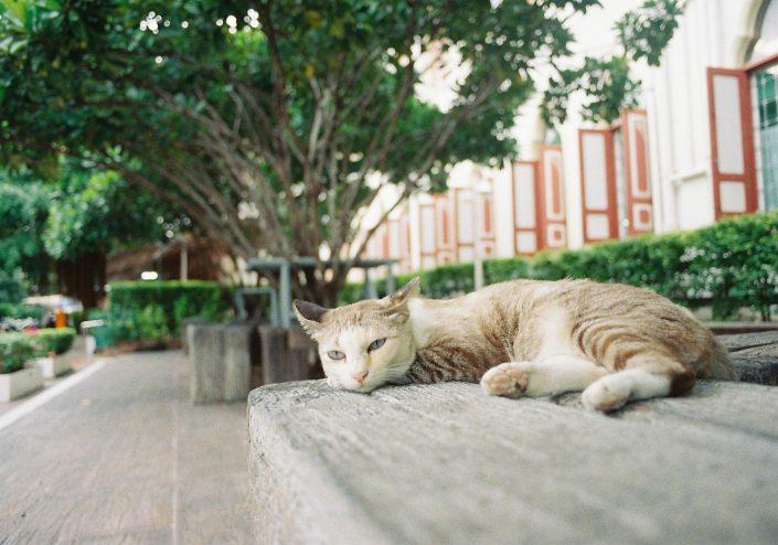 ワット・パクナムの猫